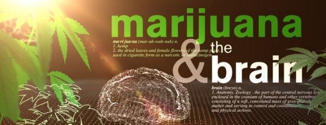 """""""La Marihuana y el Cerebro"""""""